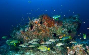 Informatieavond Magic Resorts bij Diving Holidays