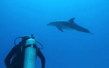 Marloes Otten - Dolfijn