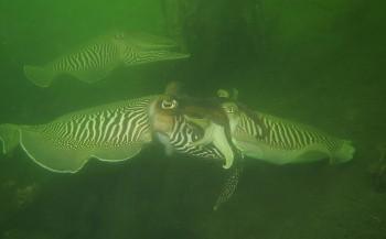 Jackie Oomen - Sepia's in troebel water