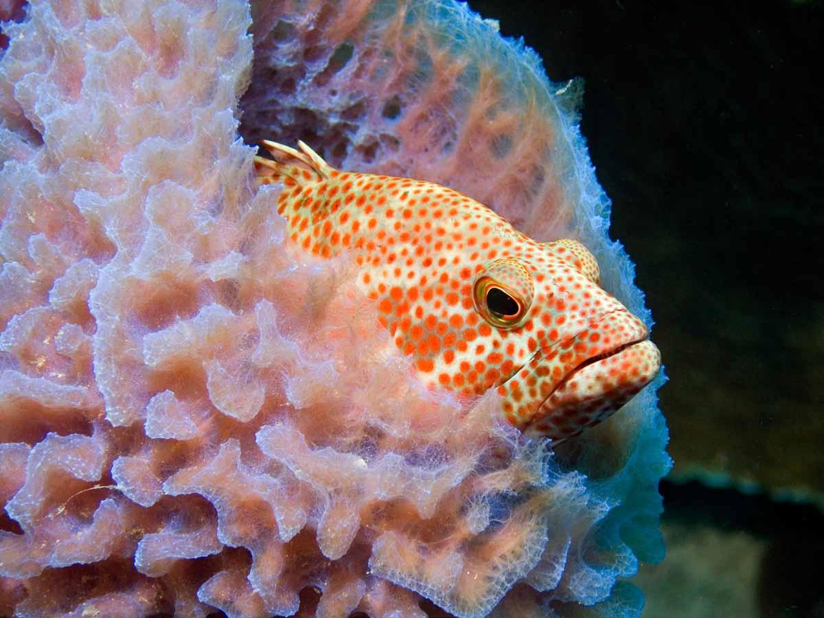 Bonaire Dive Week23