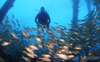 Teun Mulder- De Salt Pier op Bonaire bij schemering (met film!)