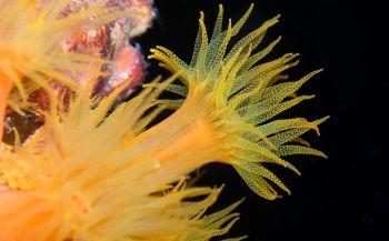Ga jij mee onder water fotograferen op Bonaire?