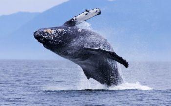 Zuid-Afrika wil meer oceaan beschermen