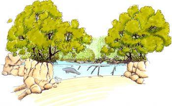 Burgers' Zoo bouwt grootste overdekte mangrove ter wereld