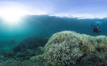 Zijn koraalriffen het slachtoffer van hun eigen succes?