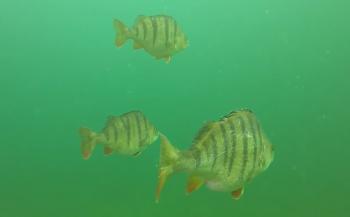 Steven Stegeman - Een duik in kraakhelder water!