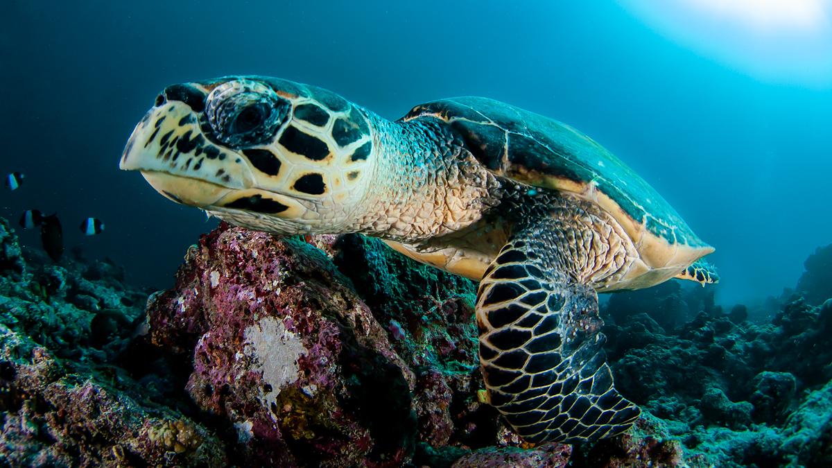 edwin van der sande - malediven - schildpad