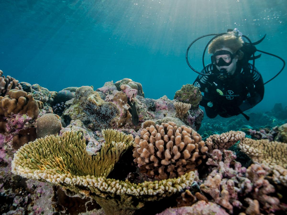 edwin van der sande - malediven - koraal met model