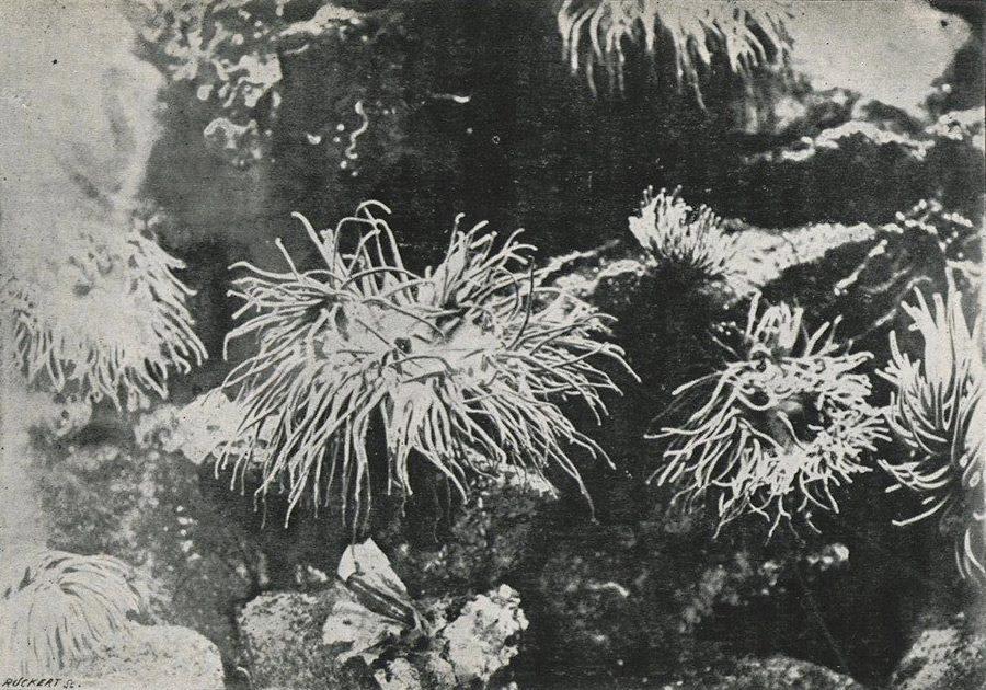 LouisBoutan4_1893