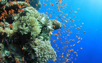 Veerboot tussen Hurghada en Sharm vaart weer