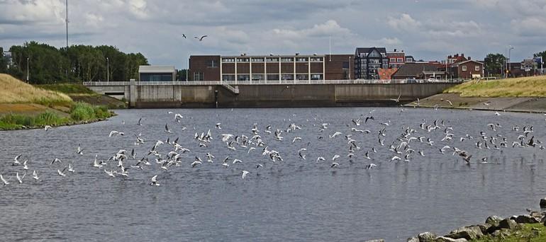 Uitwatering van de Oude Rijn in Katwijk, landinwaarts uitkijkend op het Koning Willem-Alexander gemaal, waar de Langneus-steurgarnaal zeer lang geleden al werd aangetroffen en ook nu weer kon worden aangetoond.