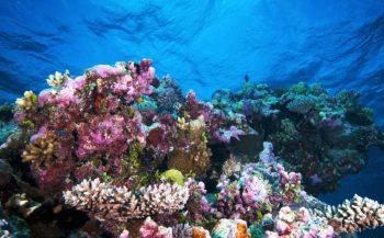Urine van vissen onmisbaar voor koraal