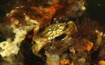Het Krabbezakje: een horrorverhaal onder water