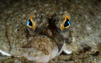 Zeeuwse vissen worden rustiger