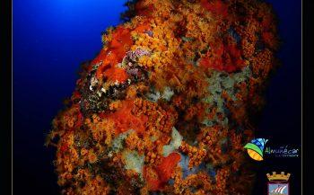 Europees Kampioenschap Onderwaterfotografie en -videografie