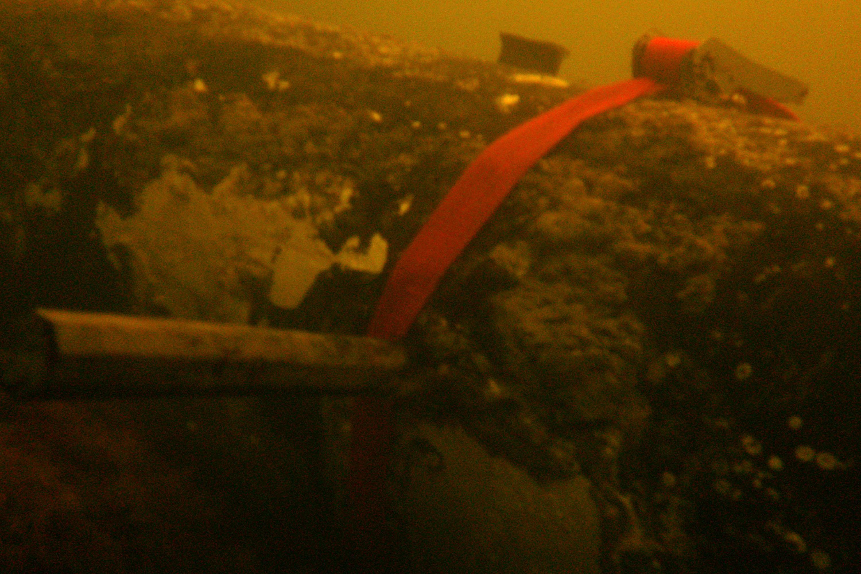 De Duitse GC-mijn uit de Tweede Wereldoorlog die mei 2012 werd geruimd voor de kust van Estland.Foto: Ministerie van Defensie