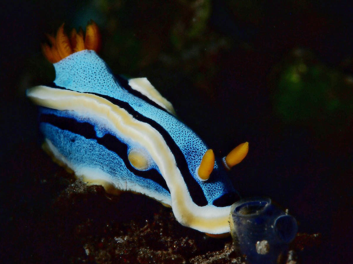jenny-smit-amed-blauwe-slak-41023