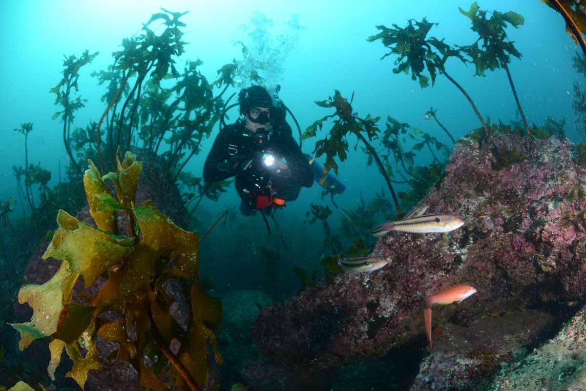Jason Paul Isley, Maleisië - 1ste prijs Groothoek met duiker