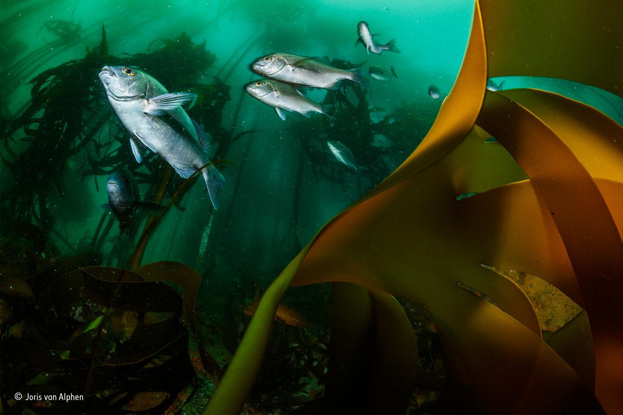 Joris van Alphen - Wildlife Photographer of the Year 2016