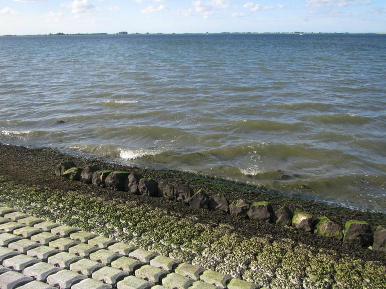 Oude basaltblokken, begroeid met het zeldzame groefwier, die zijn teruggeplaatst op de nieuwe steenglooiing