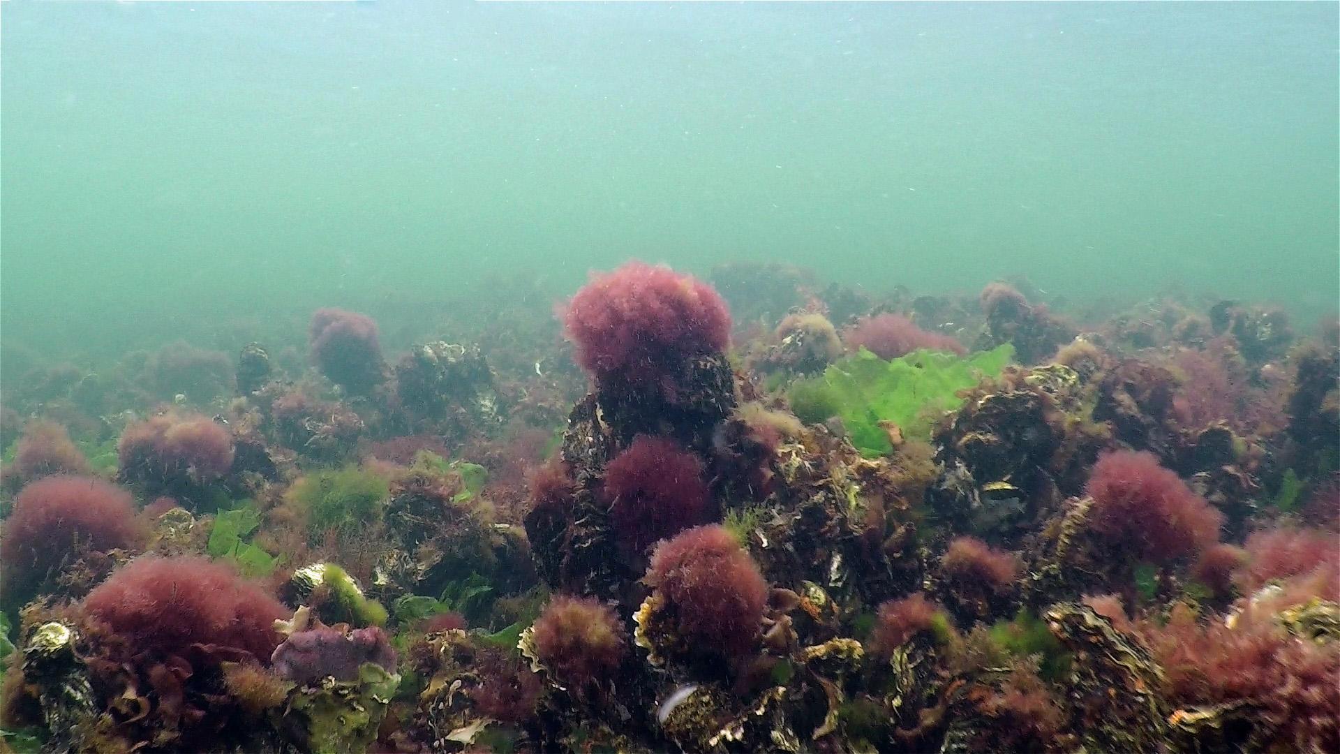 Dirk_Van_den_Bergh_20161007_onderwaterlandschap-41496