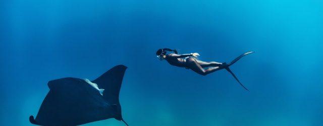 Ocean Film Festival in Belgische steden – win kaarten!
