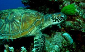 Stans van Hoek - Live-aboard op het Great Barrier Reef