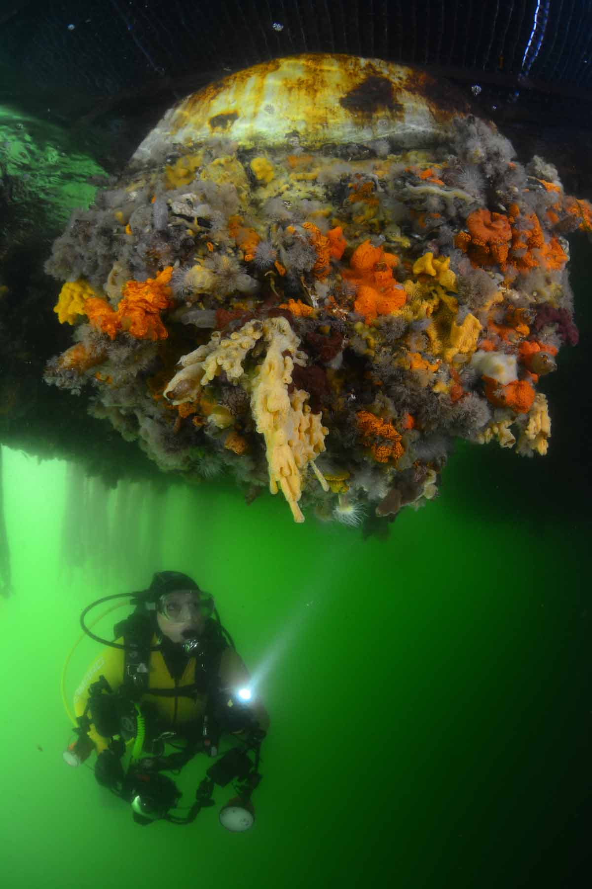 Filip Staes - Goud - ONK - Groothoek met duiker