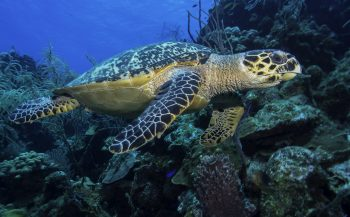 Boven de duizelingwekkende drop-offs van Belize