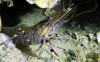Dirk Van den Bergh - Specialty krabben, kreeften en garnalen