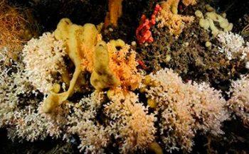Koraalriffen - Al het goede komt van boven