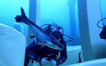 Vincent Dorresteijn - Duiken in een aquarium