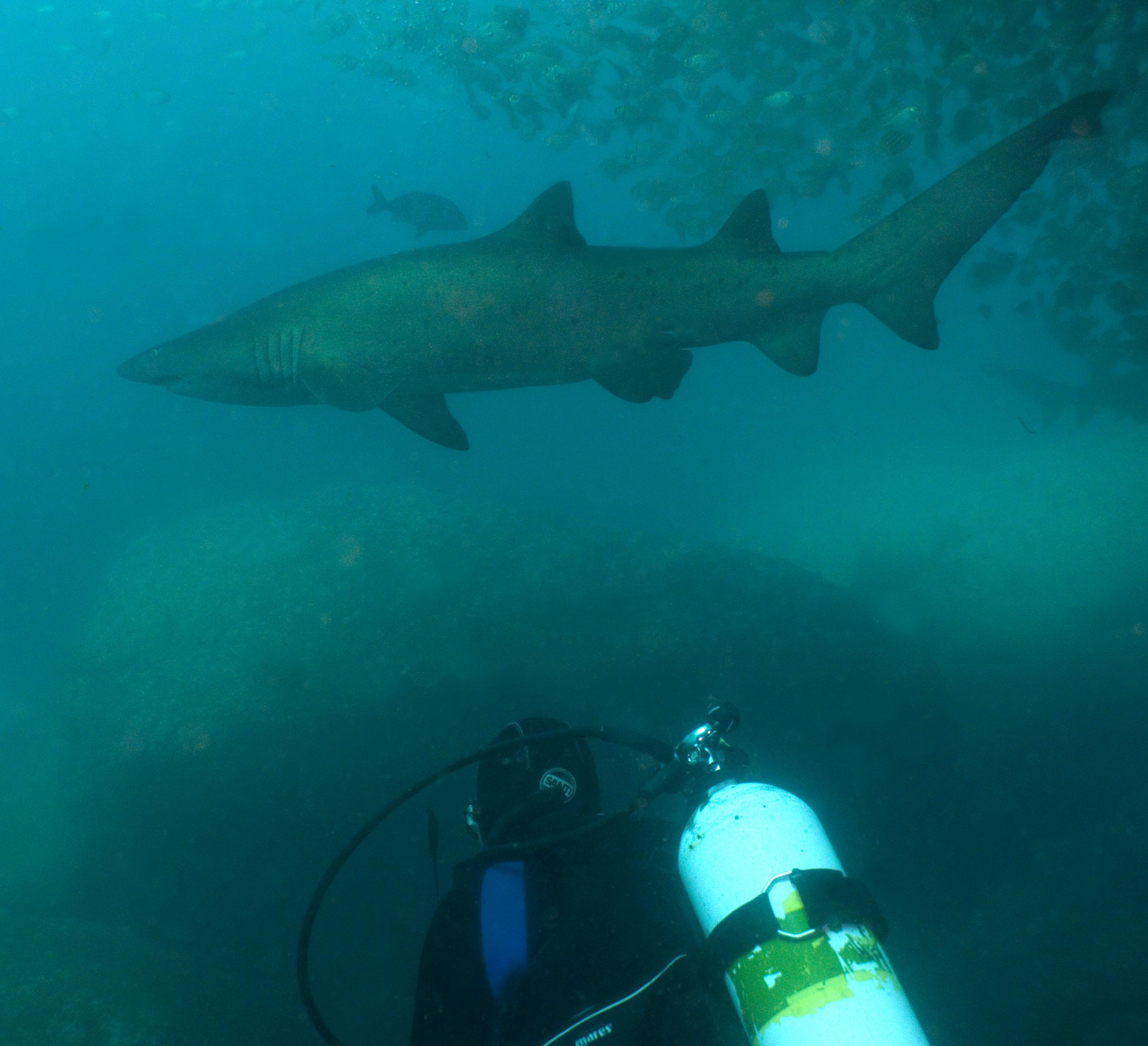 stans-duiker+haai-42876