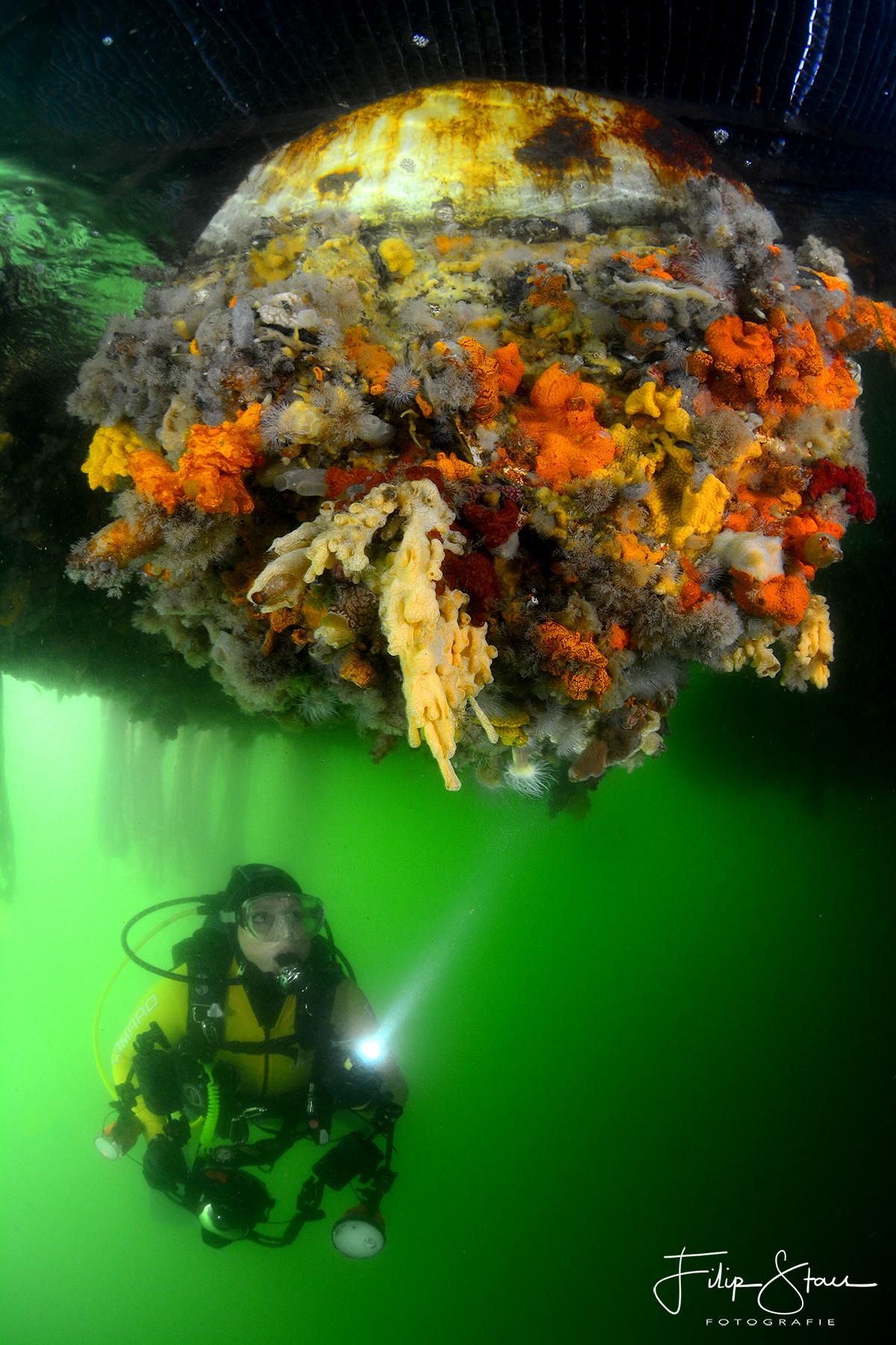 1ste-plaats-onk-groothoek-met-duiker-2016
