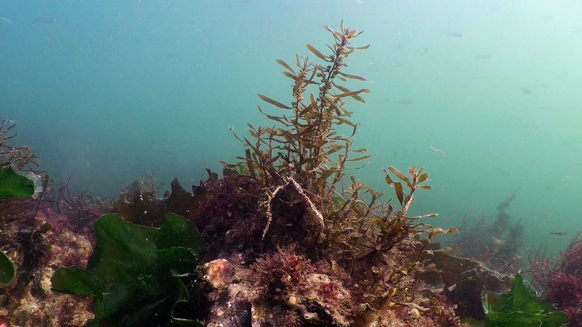 dirk_van_den_bergh_20161009_onderwaterlandschap2
