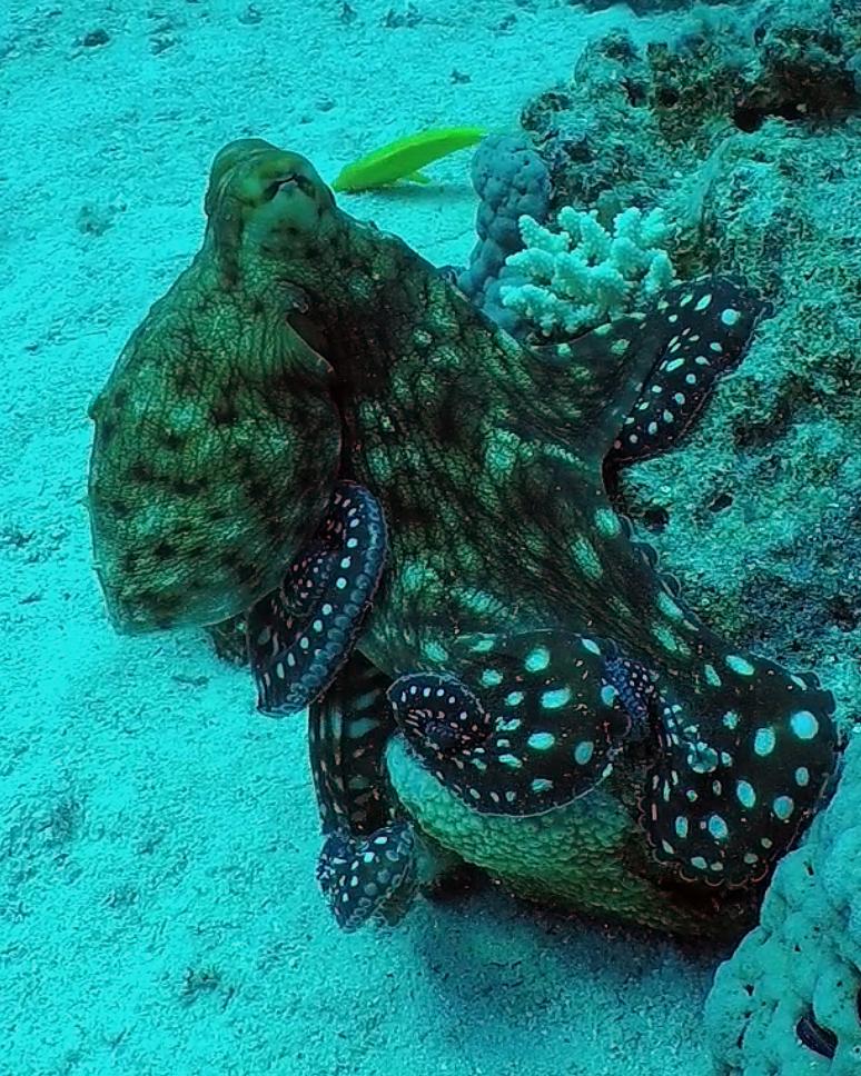Dirk_Van_den_Bergh_20161202_octopus-44212