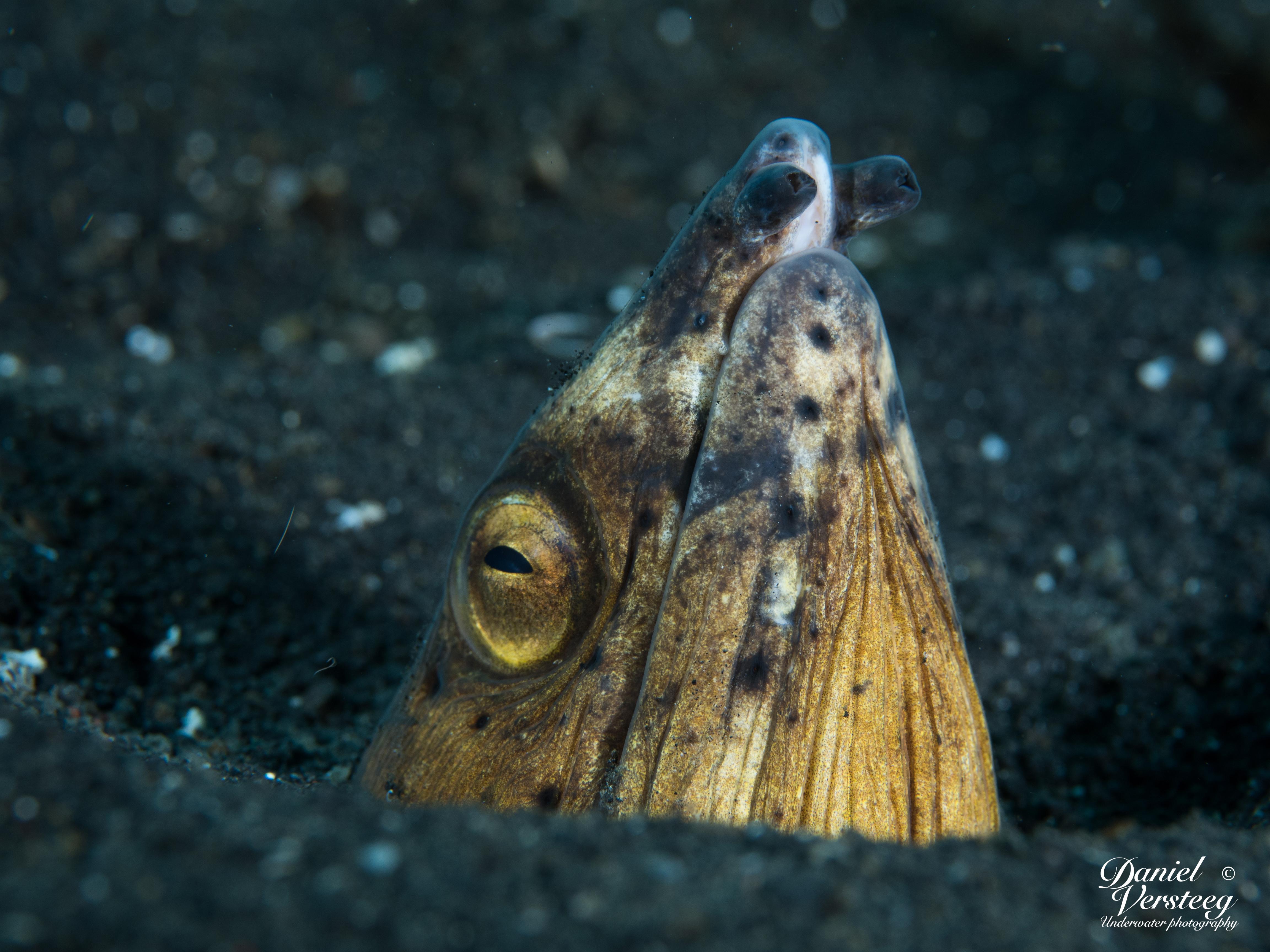 Daniel_Versteeg_foto-2-snak-eel-normale-belichting