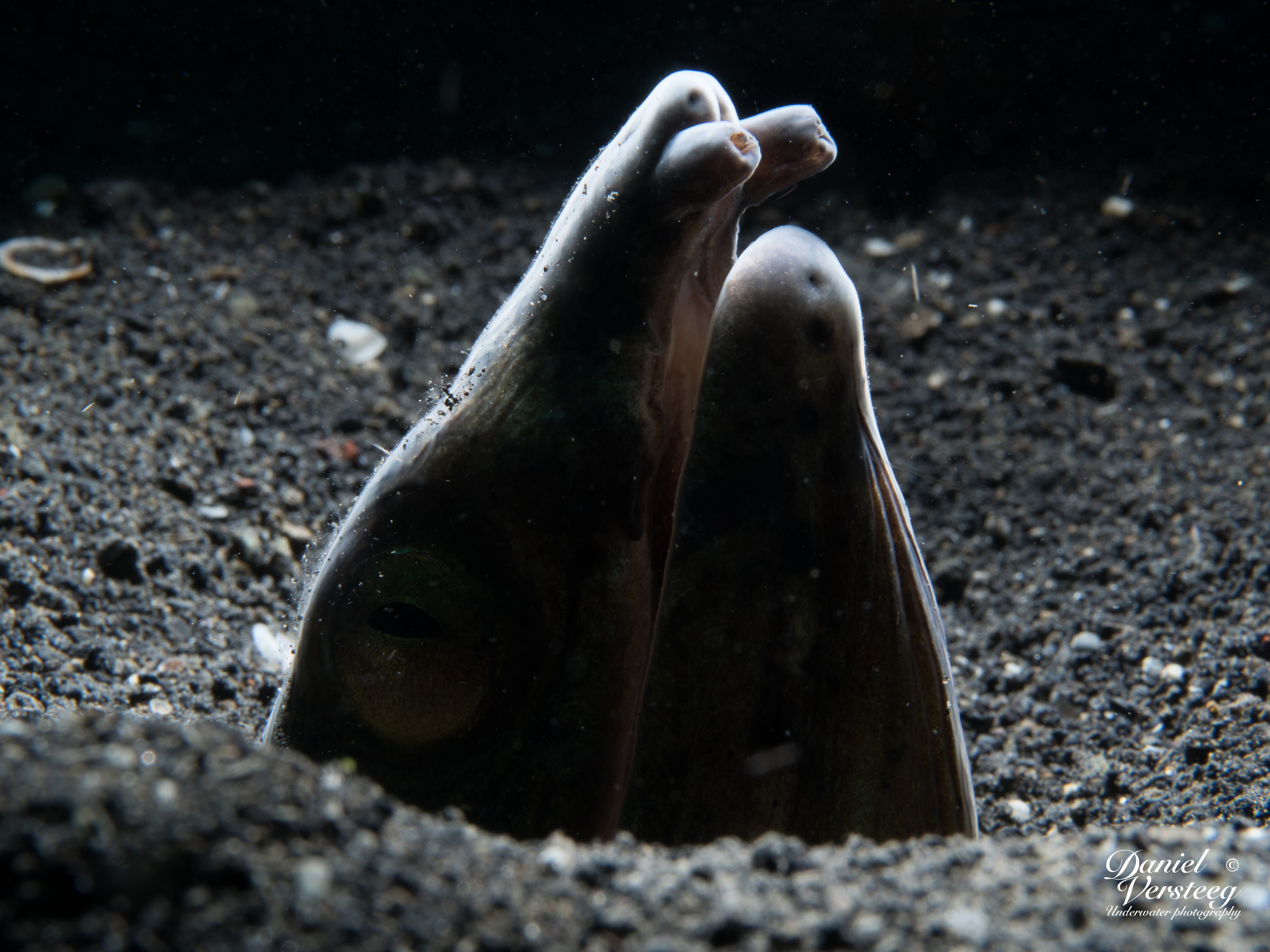 Daniel_Versteeg_foto-3-snake-eel-snoot-van-boven