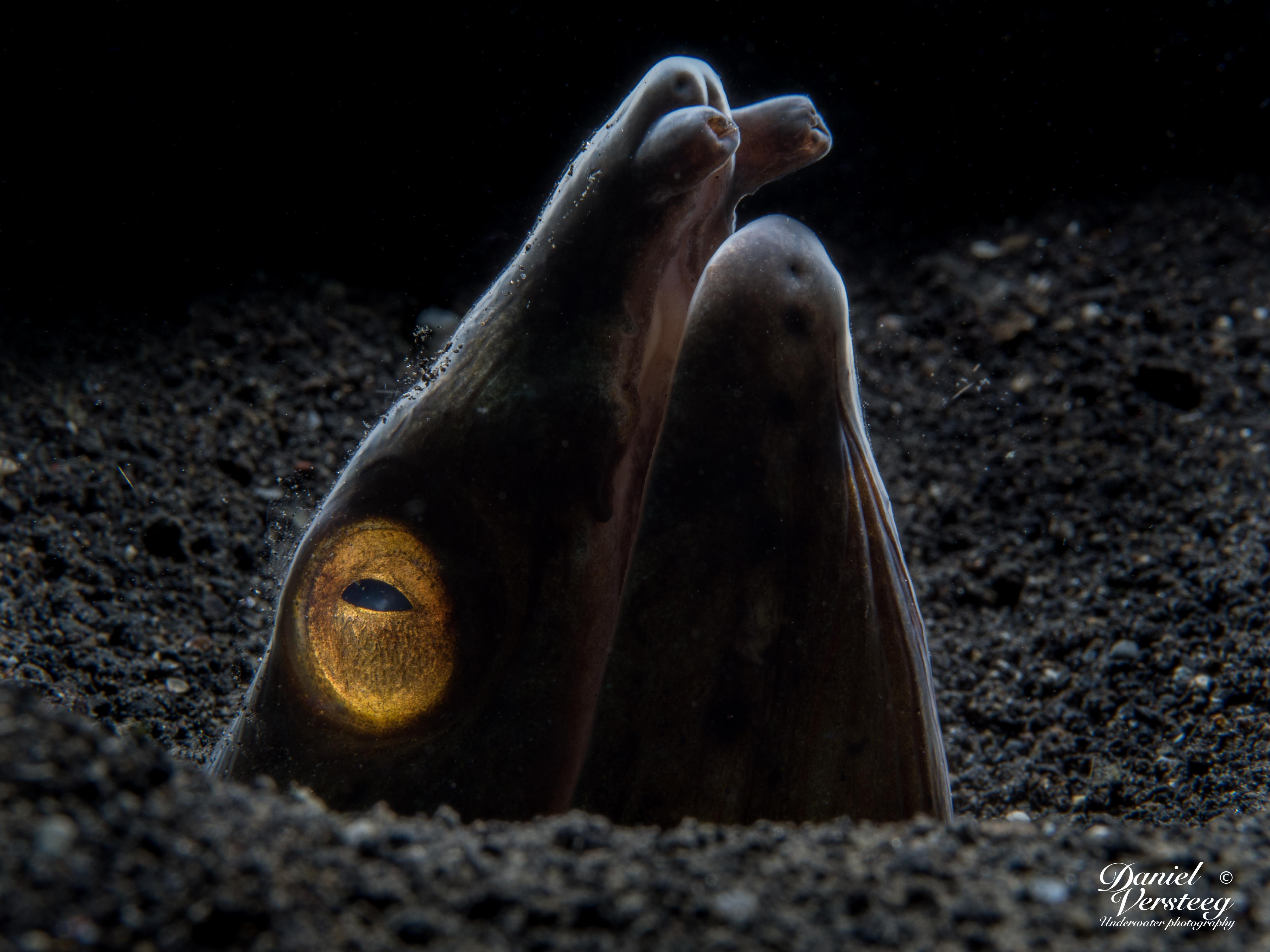 Daniel_Versteeg_foto-7-snake-eel-eindresultaat