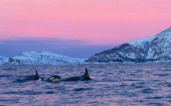 OFFT - Over orka's, sepia's en brak water