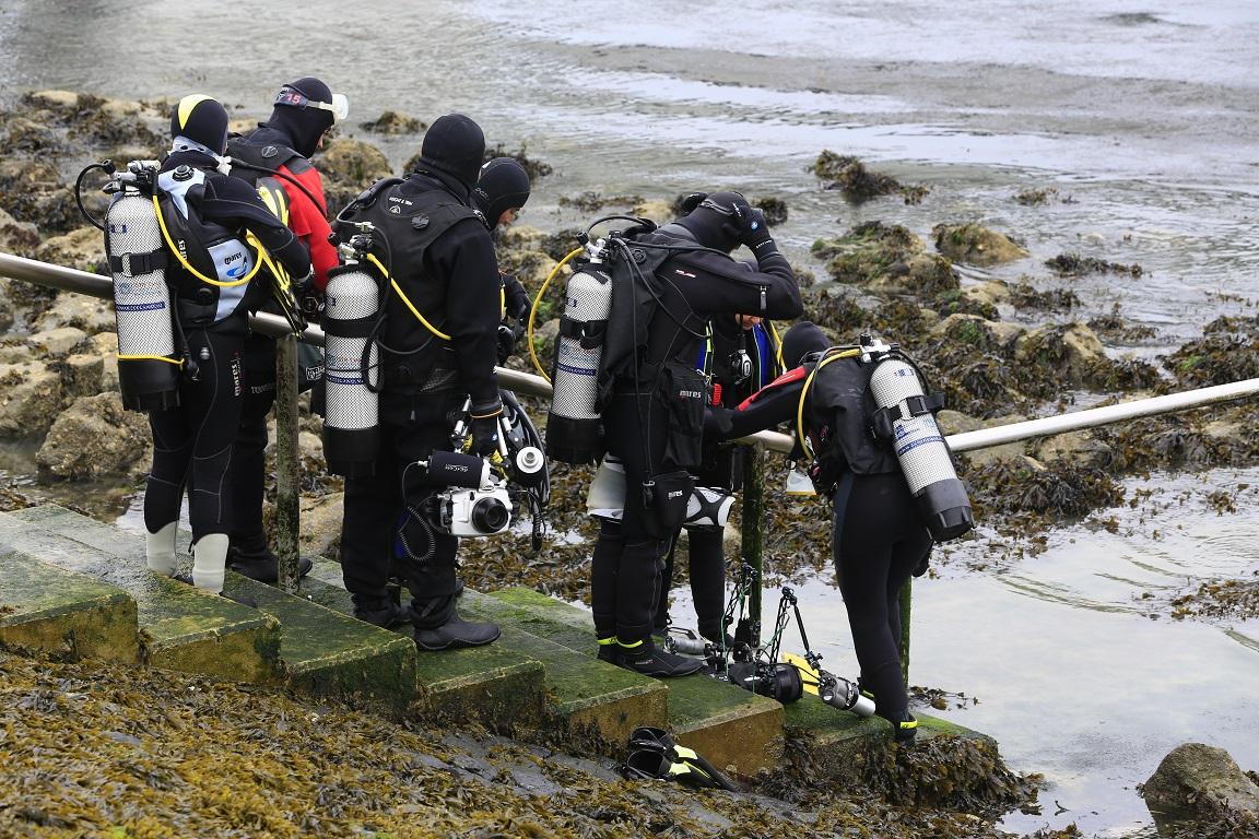 groep duikers
