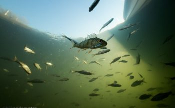 Winterclustering: vissen kijken onder het ijs