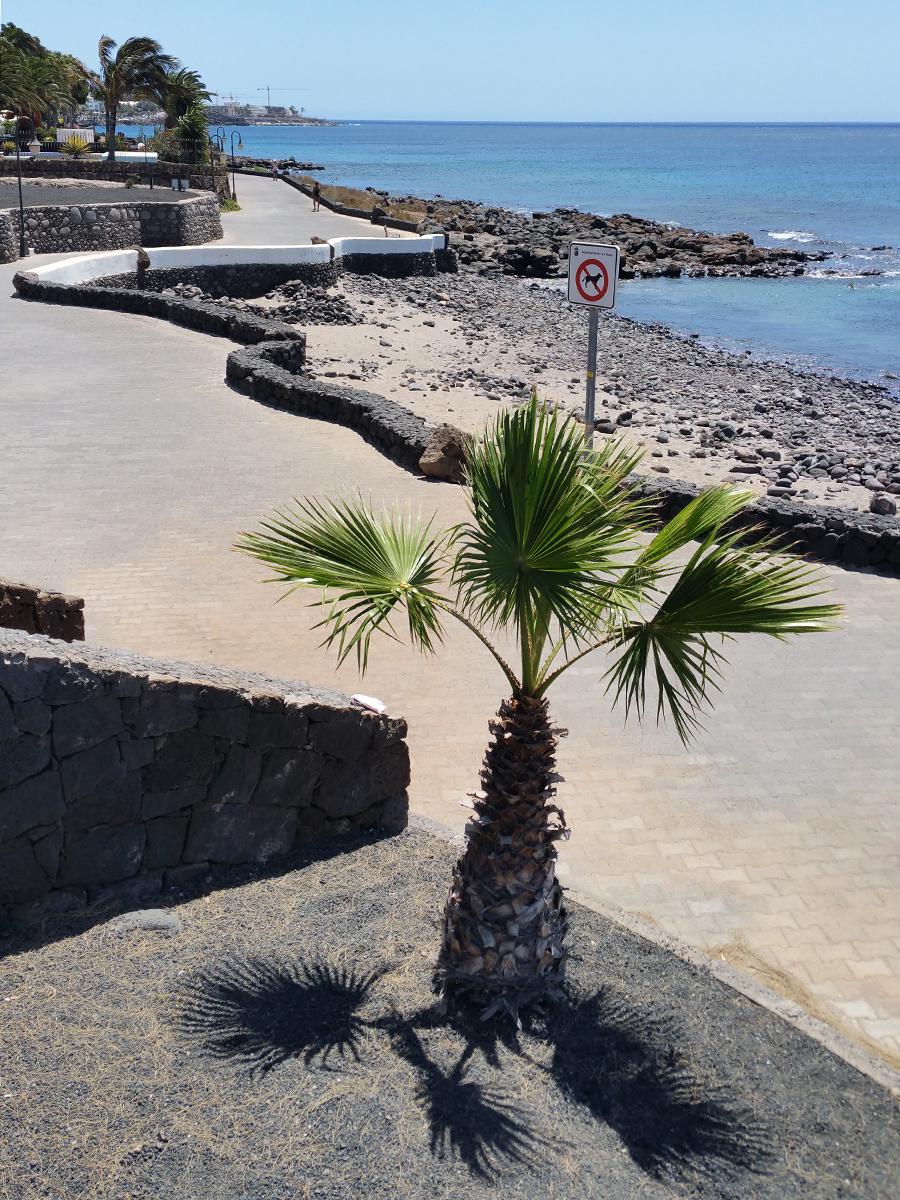 Dive_College_Lanzarote_Strand_3