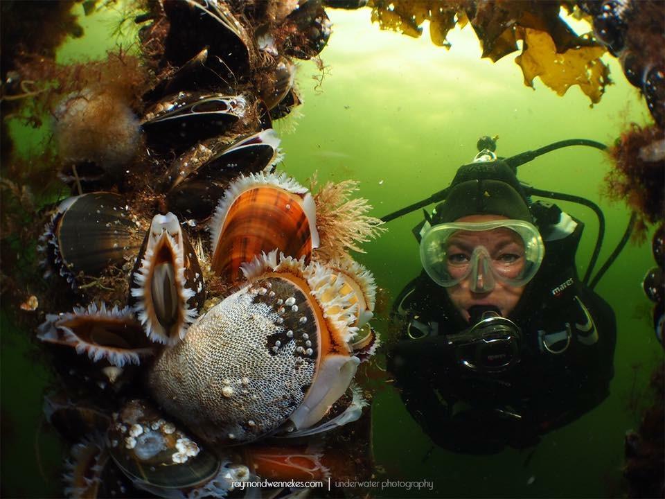 Raymond-Wennekes_Onderwaterhuis.NL_groothoek-Zeeland