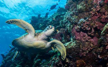 Noord-Sulawesi: drie favorieten van Pim van Schendel