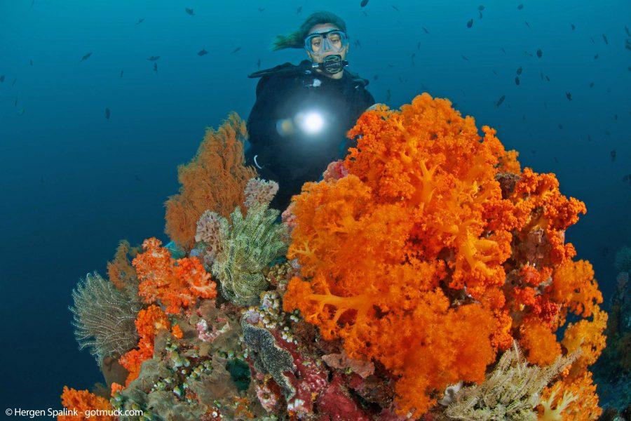 Soft Coral, Bangka