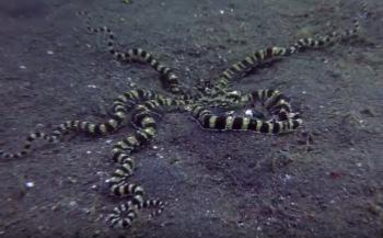 Daan van Wijk - Mimic Octopus doet jasje uit en weer aan