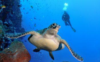 Informatieavond over duiken in Indonesië