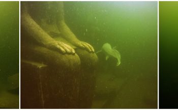 Antoinette Derksen - Duiken tussen levende fossielen
