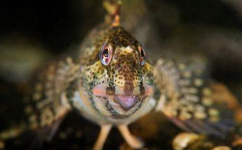 Onderwaternatuur in spotlight op Duikvaker